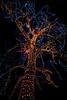 CCC94-03 - Christmas Tree by jim3584