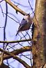 CCC95-09 - Small Bird by VTerlakyPhoto