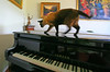 CCC97-02 - Cat on Piano