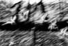 CCC97-03 - Dizzying Flight