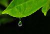 CCC98-48 - Garden Waterdrop