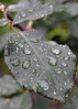 CCC98-03 - First Day of Winter Raindrops
