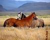 Two Horses by jkwhiteley