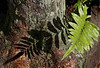 Description - Swamp Fern Shadow on Cypress Tree Trunk <b>Title - Copy-Cat</b> 1st Prize <i>- Irina Velikaya-Floyd</i>