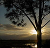 Description - Slash Pine Tree at Sunset <b>Title - Sunset at Loxahatchee</b> Honorable Mention <i>- Arnold Dubin</i>