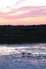 Description - Ibis at Sunset <b>Title - Sunset Ibis</b> <i>- Samantha Lantz</i>