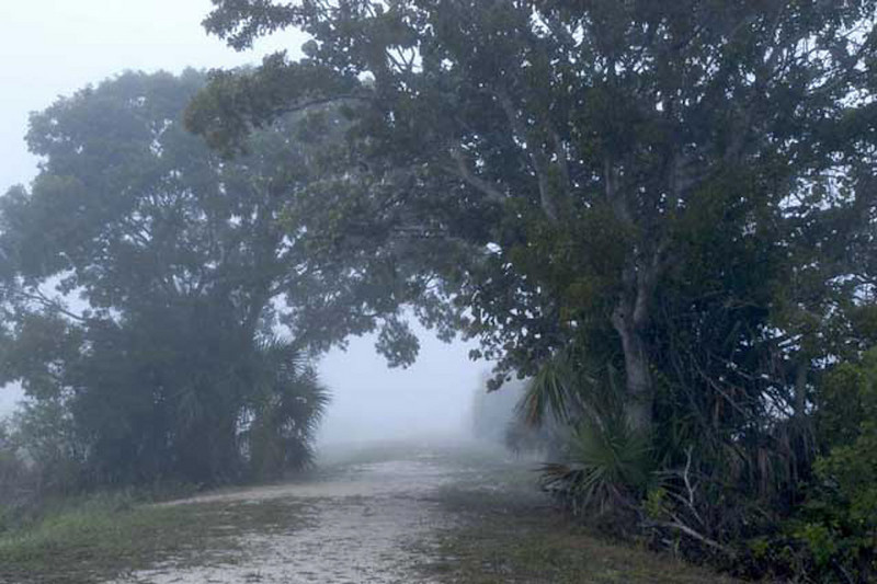 Description - Into the Fog - Marsh Trail <b>Title - Into the Fog</b> 1st Place <i>- Kathleen Fosselman</i>