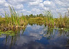 Description - Canoe Trail - White Water Lily, Cattails, Sawgrass and Tree Island <b>Title - Canoe Trail</b> 2nd Place <i>- Martin Fitzgerald</i>