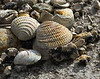 Description - Shells <b>Title - Somebody's Lunch</b> 3rd Place <i>- Kit Snider</i>