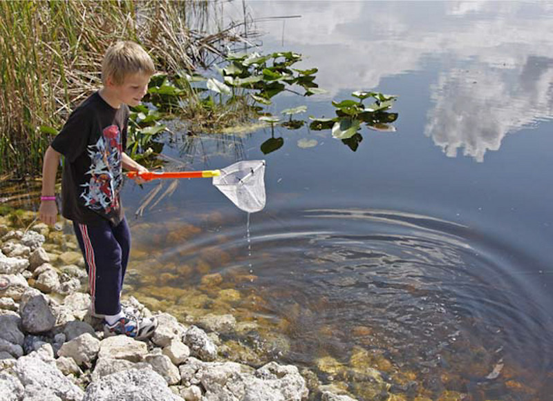 Description - Boy with Dip Net <b>Title - Boy with Dip Net</b> Best in Show <i>- Tom Rasmussen</i>