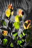 Description - Artist's Palette - Coco Plum Leaves and Palm Frond <b>Title - Artist's Palette</b> <i>- Leonard Hellerman</i>