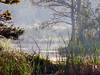 Description - Trees and Marsh in Morning Mist <b>Title - Morning Mist</b> 2nd Place <i>- Curt Dalton</i>