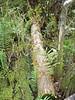 Description - Cypress Tree Bridge with Ferns and Water Spangles <b>Title - Tree Bridge</b> <i>- Michael Watkins</i>