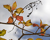 Description - Fall Leaves <b>Title - Leaves At Loxahatchee</b> <i>- Leonard Hellerman</i>