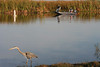Description - Great Blue Heron and Fishermen <b>Title - Fishing Buddies</b> <i>- Bill Burnett</i>