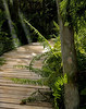 Description - Cypress Swamp Boardwalk with Giant Sword Ferns <b>Title - Sun Streaks</b> Honorable Mention <i>- Kit Snider</i>