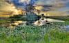 Description - Cypress Tree Island at Sunset <b>Title -  Sunset At Loxahatchee </b> <i>- Leonard Hellerman</i>