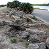 Description - Rocks at Boat Ramp with Cabbage Palms <b>Title - Loxahatchee Wildlife Refuge On The Rocks</b> <i>- Sid Rotter</i>