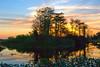 Description - Cypress Trees at Sunset <b>Title - Trees At Sunset</b> <i>- Leonard Friedman</i>