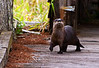 Description - Otter Snooping <b>Title - Otter Snooping</b> Best in Show <i>- Ed Mattis</i>