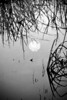 Description - Moon Reflection <b>Title - Moon on Water</b> <i>- -Carole Usdan</i>