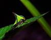 Description - Thorn Treehopper <b>Title - Thorn Treehopper</b> 2nd Place <i>- Larry Crutcher</i>