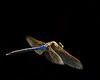 Description - Green Darner Dragonfly in Flight <b>Title - Dragon Flight</b> <i>- Melinda Moore</i>