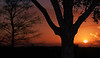 Description - Oak and Cypress Trees at Sunset <b>Title - Oak Sunset</b> Honorable Mention <i>- Mary White</i>
