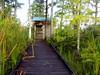 Description - Birdwatching Blind beside Marsh Impoundment <b>Title - The Blind</b> <i>- Meg Puente</i>