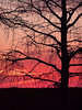 Description - Cypress Tree at Sunset <b>Title - Tree at Sunset</b> 3rd Place <i>- Phoenix Marks</i>