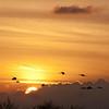 Description - Birds At Sunset <b>Title - Flaming Sky</b> <i>- Fran Swirsky</i>