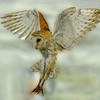 Description - Barn Owl <b>Title - Barn Owl Angel</b> 2nd Place <i>- Margaret Puente</i>