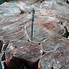 Description - Cypress Tree Stump <b>Title - Ageless</b> <i>- Ira Rosenthal</i>