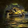 Description - Peninsula Cooter With Algae <b>Title - Turtle</b> 1st Place <i>- Kit Snider</i>