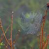 Description - Spider Web <b>Title - Wet Spider Web</b> 2nd Place <i>- Michael Raiman</i>