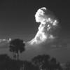 Description - Cloud Over Cabbage Palm <b>Title - Cloud Over Cabbage Palm</b> <i>- Jeremy Raines</i>