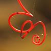 Description - Twisty Red Vine <b>Title - Twisty Red Vine</b> <i>- Kathleen Fosselman</i></i>