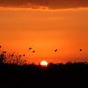 Description - Sunset <b>Title - Loxahatchee Sunset</b> <i>- Burton Segelin</i>