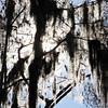 Description - Spanish Moss and Cypress Trees <b>Title - Moss</b> <i>- Jeff Love</i>