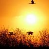 Description - Loxahatchee Sunset <b>Title - Loxahatchee Sunset</b> <i>- Burton Segelin</i>