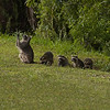 Description - Raccoon Family <b>Title - Please God Give Me A Break From These Kids</b> <i>- Alan Crutcher</i>