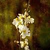 Description - Duck Potato <b>Title - Flower</b> 1st Place <i>- Kit Snider</i>