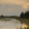 Description - Marsh Through Artist's Lens <b>Title - Pond Memory</b> <i>- Dennis Usdan</i>