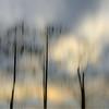 Description - Trees Through Artist's Lens <b>Title - Fading Trees</b> <i>- Dennis Usdan</i>