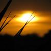 Description - Sunset Over Marsh <b>Title - Flying Saucer</b> <i>- David Lee</i>