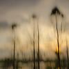 Description - Trees Through Artist's Lens <b>Title - Tall Trees</b> <i>- Dennis Usdan</i>