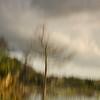 Description - Tree and Marsh Through Artist's Lens <b>Title - Tree Memory</b> <i>- Dennis Usdan</i>