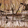 Description - Marsh Birds in Silhouette - Glossy ibis with Boat-tailed Grackles <b>Title - Afternoon Silhouette</b> <i>- Myrna Rodkin</i>