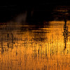 Description - Marsh in Sunset Glow <b>Title - Partly Reflected</b> <i>- Nubia Richman</i>