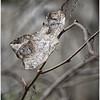 Description - Dead Leaf <b>Title - Beckoning</b> <i>- Debbie Rubin</i>